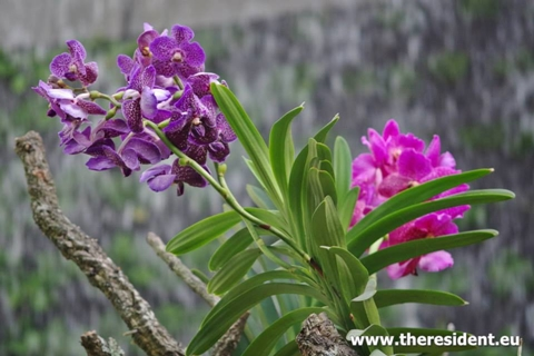 Orchids in the Estepona Orchid house